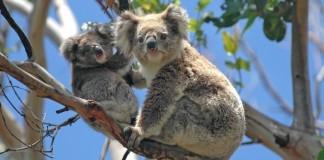 Vado a Vivere in Australia su youtube