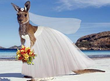 Kangaroo wedding - Vado a Vivere in Australia