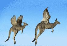 Miti sull'Australia - Vado a vivere in Australia