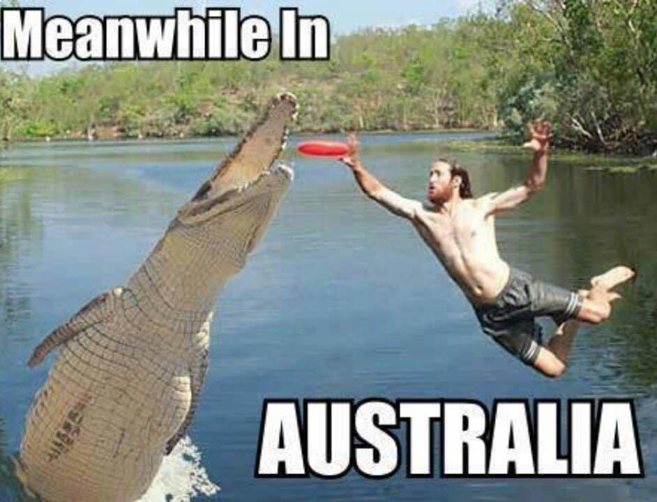 animali pericolosi Australia