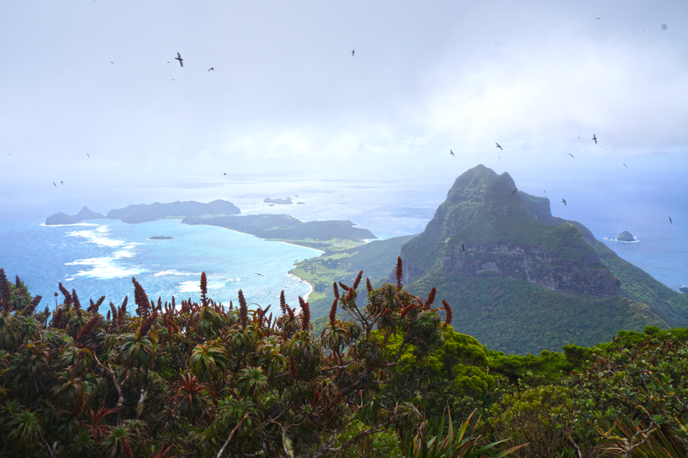 Lord Howe Island - Vado a vivere in australia