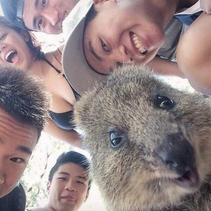 quokka selfie di gruppo