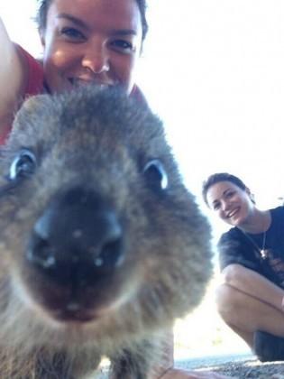 quokka - vado a vivere in australia