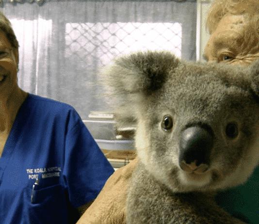 Assicurazione sanitaria Australia - vavia